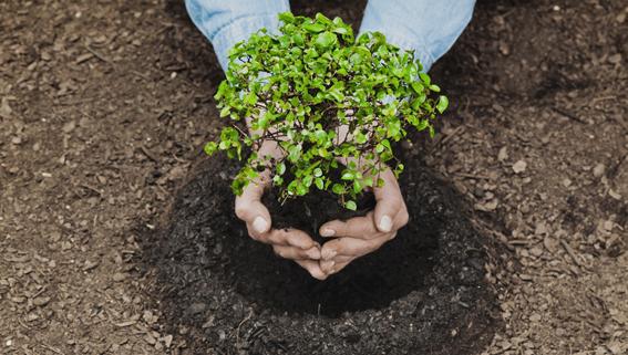 Treedom adotti un albero piccolo albero che viene piantato
