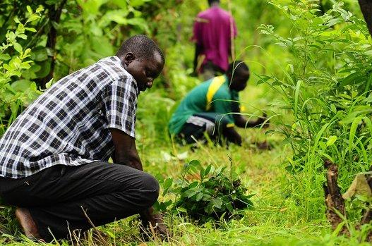 Treedom adotti un albero contadini che lavorano