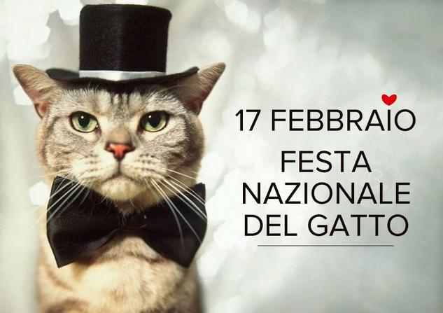 incontri per gli amanti del gatto UK