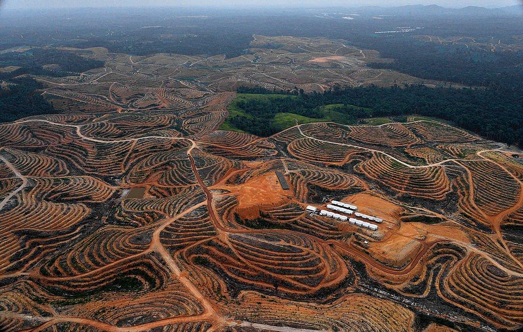coltivazione intensiva olio di palma