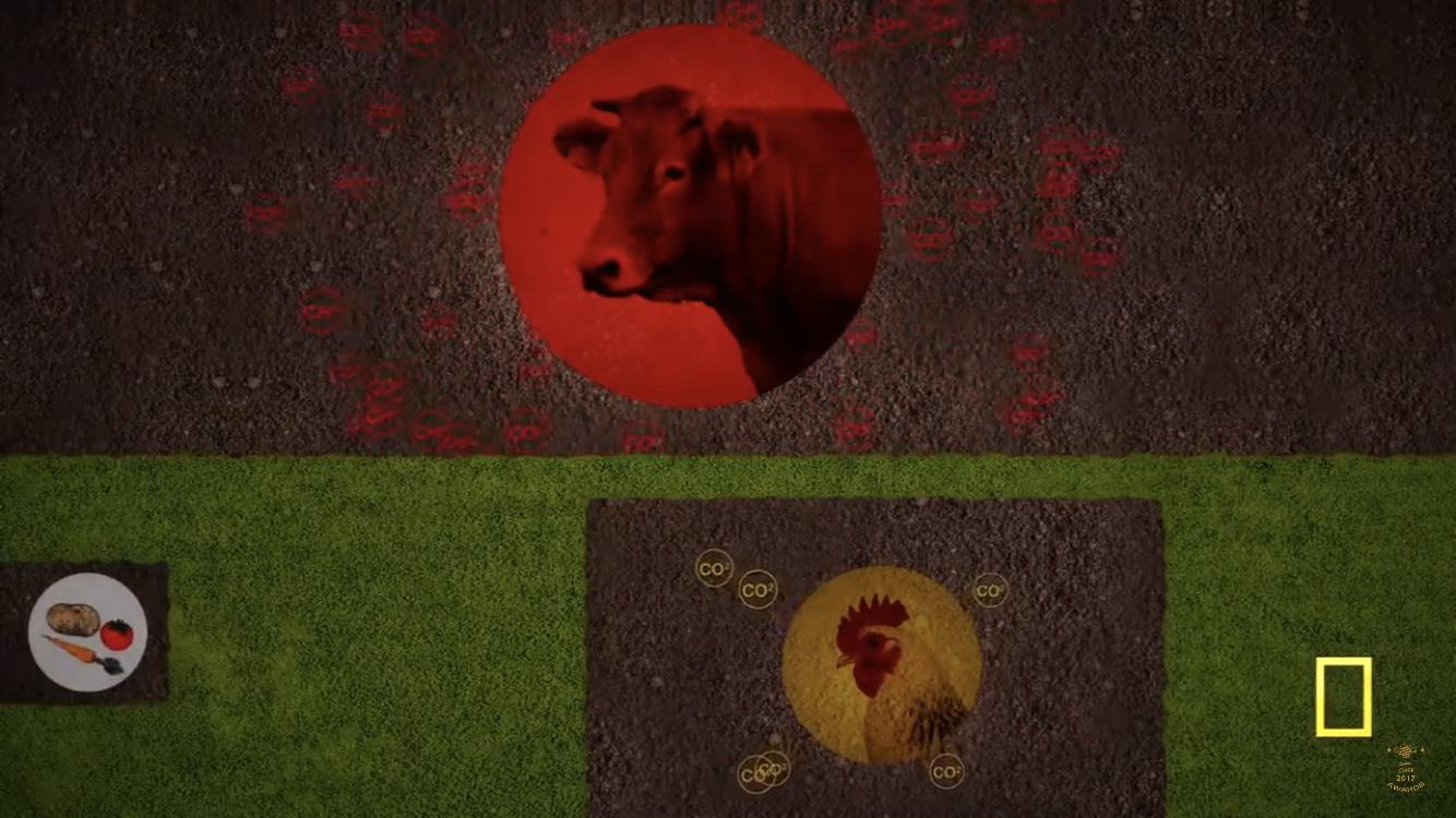 Confronto del consumo delle risorse tra carne bovina e alternative