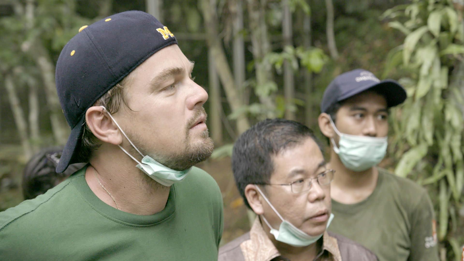 Leonardo DiCaprio disboscamento delle foreste