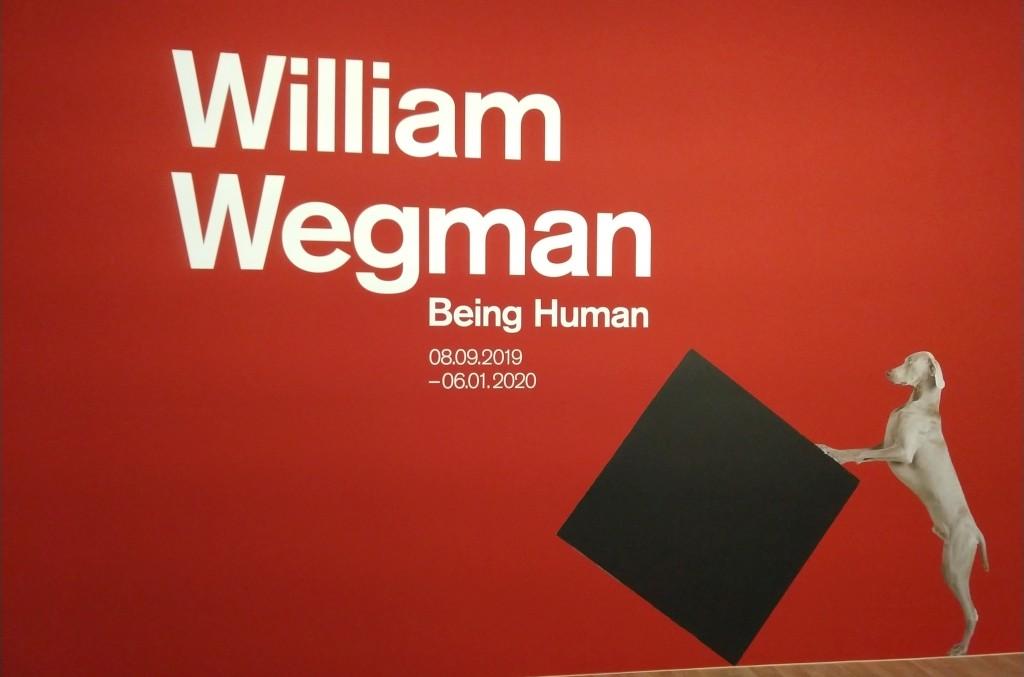 colori, interno, mostra di William Wegman, foto di cane grigio su sfondo rosso con titolo mostra William Wegman Being Human stampato bianco
