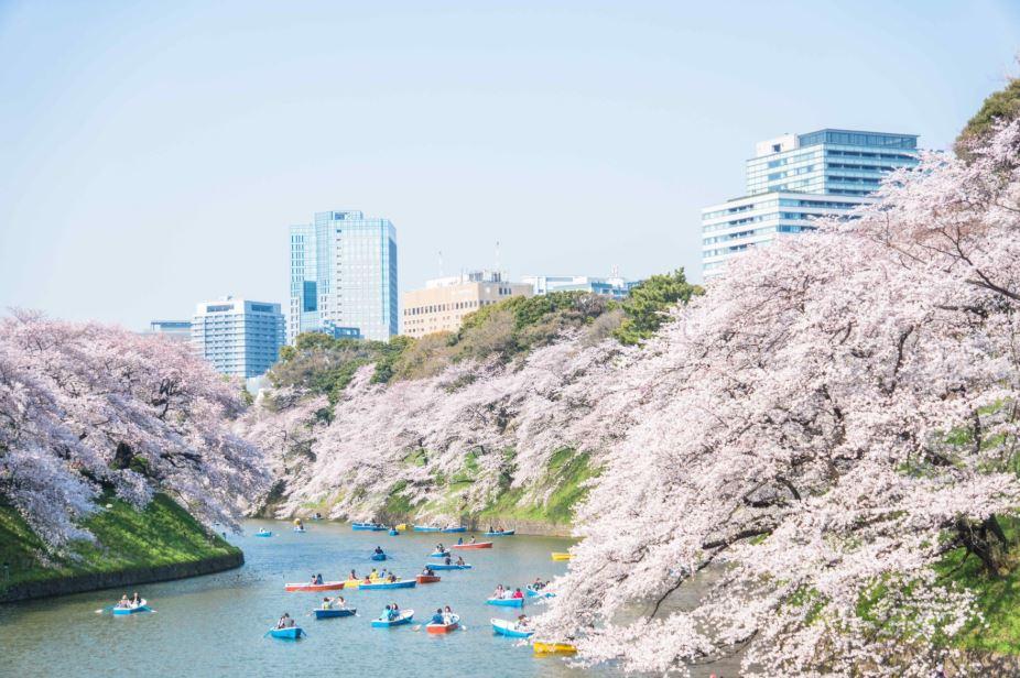 tokyo sakura Tokyo tour virtuale