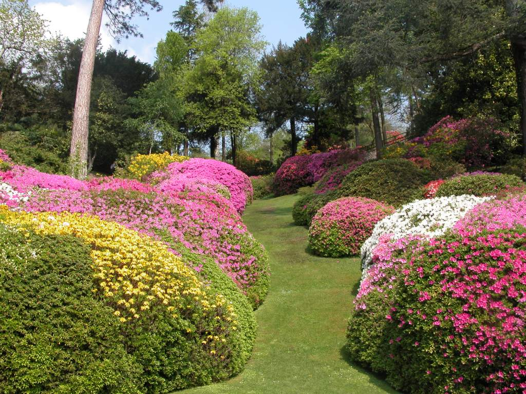 Villa Carlotta, azalee, fioriture
