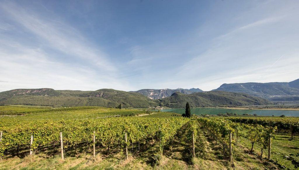 Il percorso del vino di Caldaro