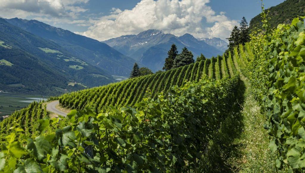 Via Vinum Venostis: il sentiero enologico della Val Venosta