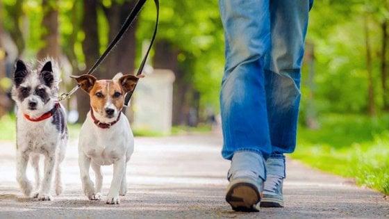 cani passeggiata al parco