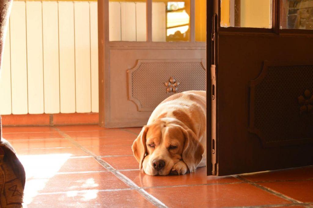 cane non vuole uscire di casa