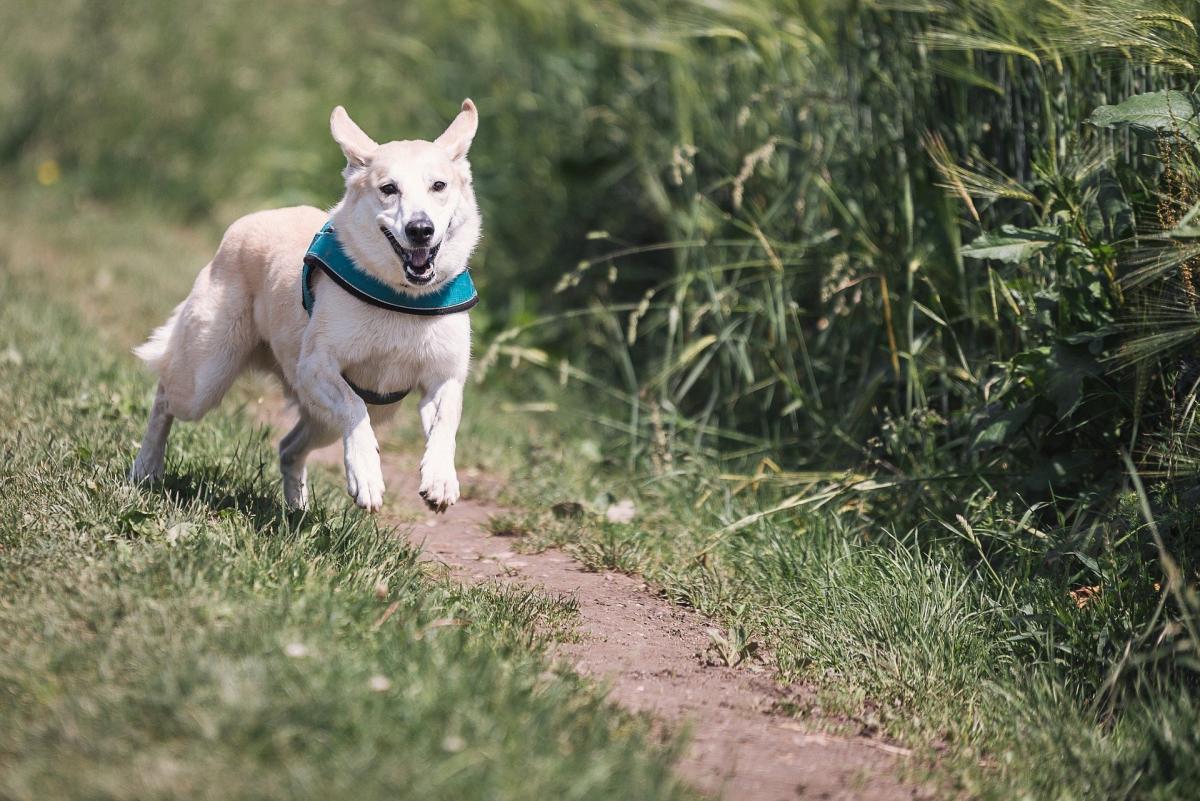 un cane corre libero nella natura