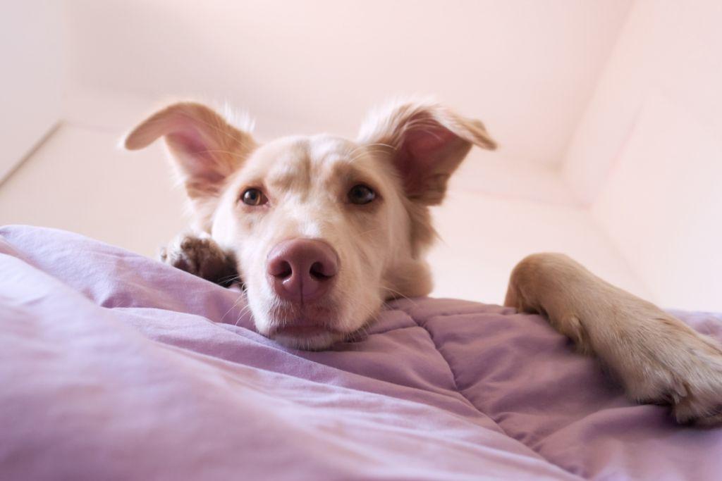 il muso di un cane in orimo piano