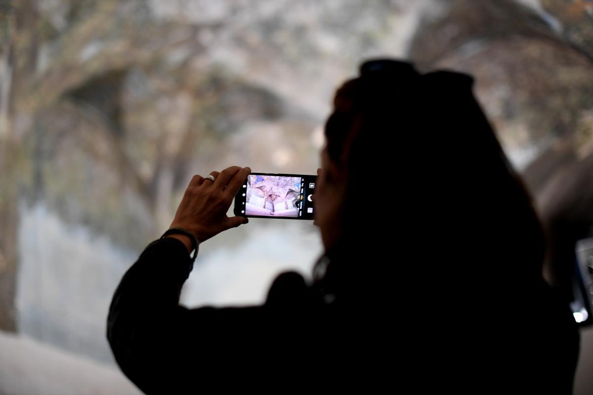 una persona di spalle con il cellulare fotografa la sala delle asse di Leonardo da Vinci