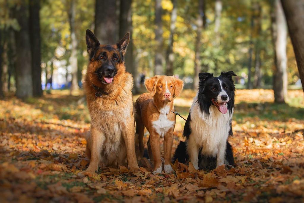un gruppo di cani in natura