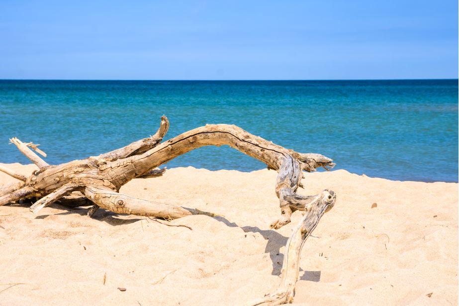 un tronco sulle dune di sappia con in fondo la vista del mare dell'Indiana Dunes National Park in Indiana