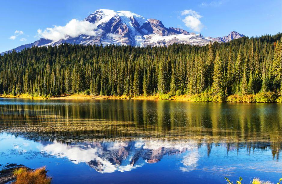 vista panoramica del monte Rainier con davanti una fitta boscaglia che si riflette sull'acqua di un lago