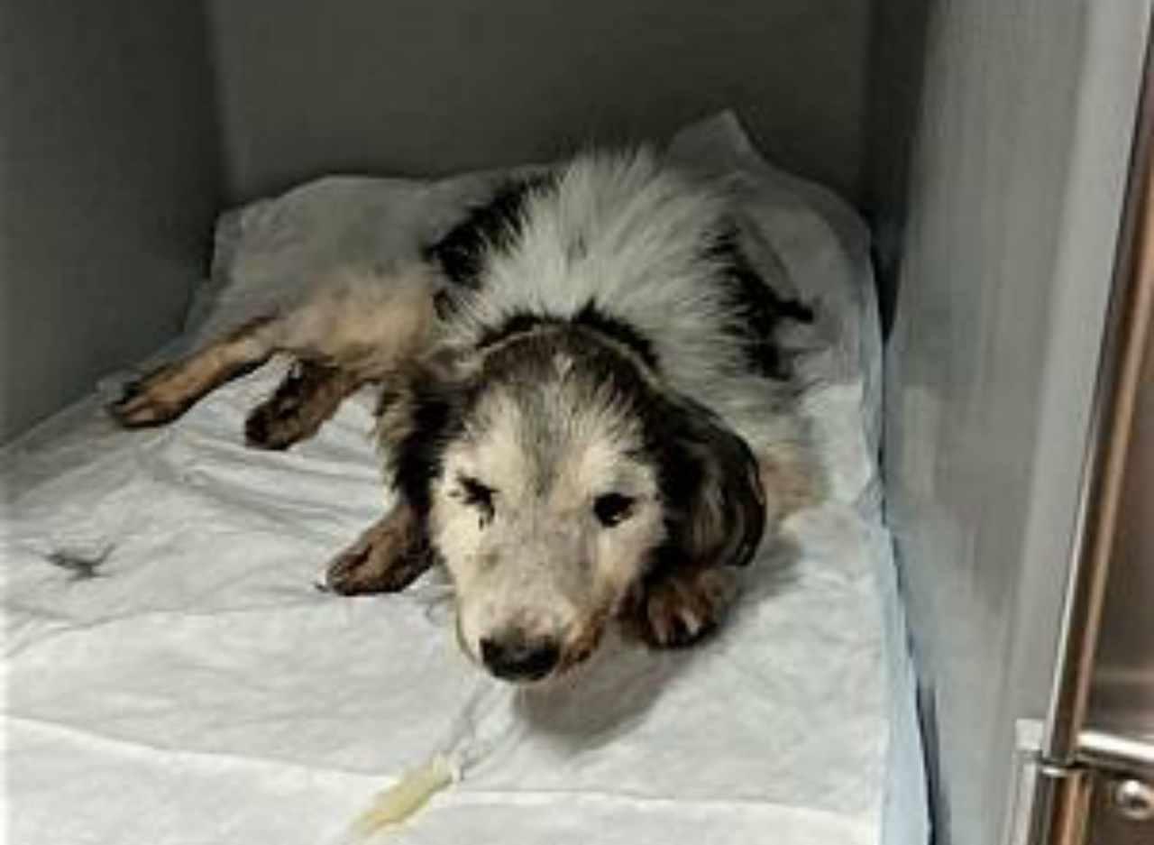 Cane anziano gettato nel cassonetto sotto cure mediche