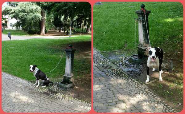 nelle foto un cane abbandonato legato con una catena a una fontanella nel parco