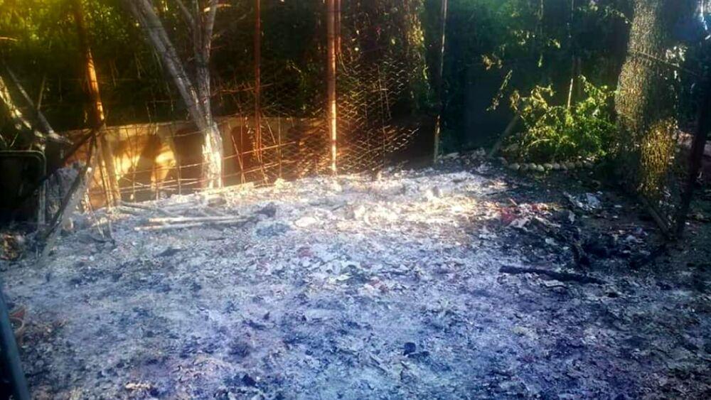 bruciata la colonia felina di Milano innagini dell'incendio