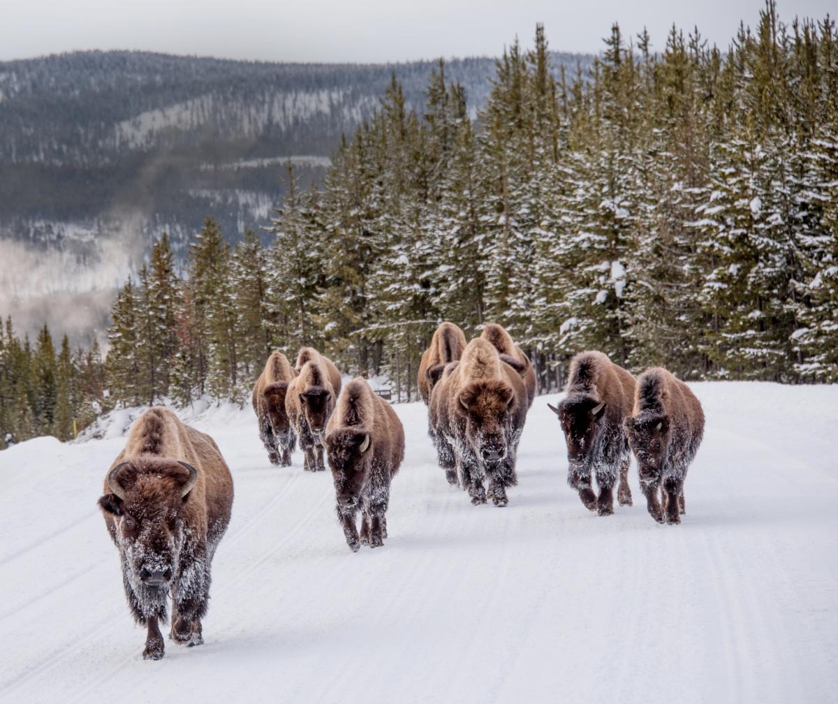 La grandiosa natura degli Stati Uniti, Montana paesaggio innevato
