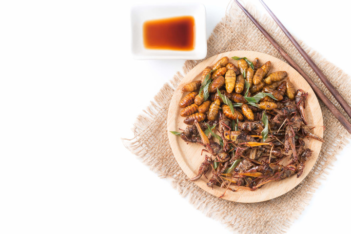 piatto con insetti