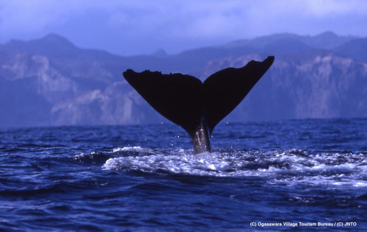 Tokyo isole Ogasawara cosa di una balena