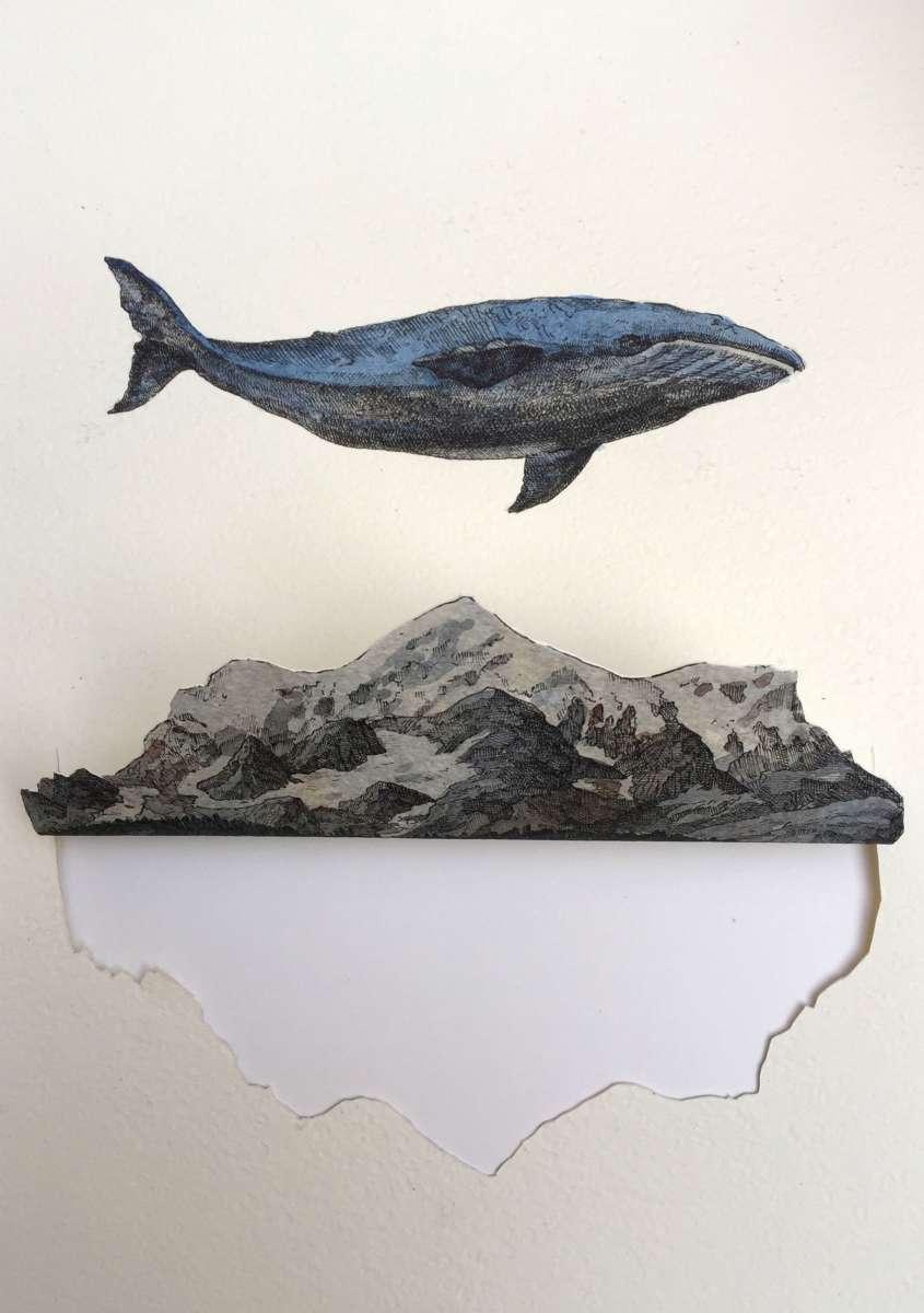 disegno con balena