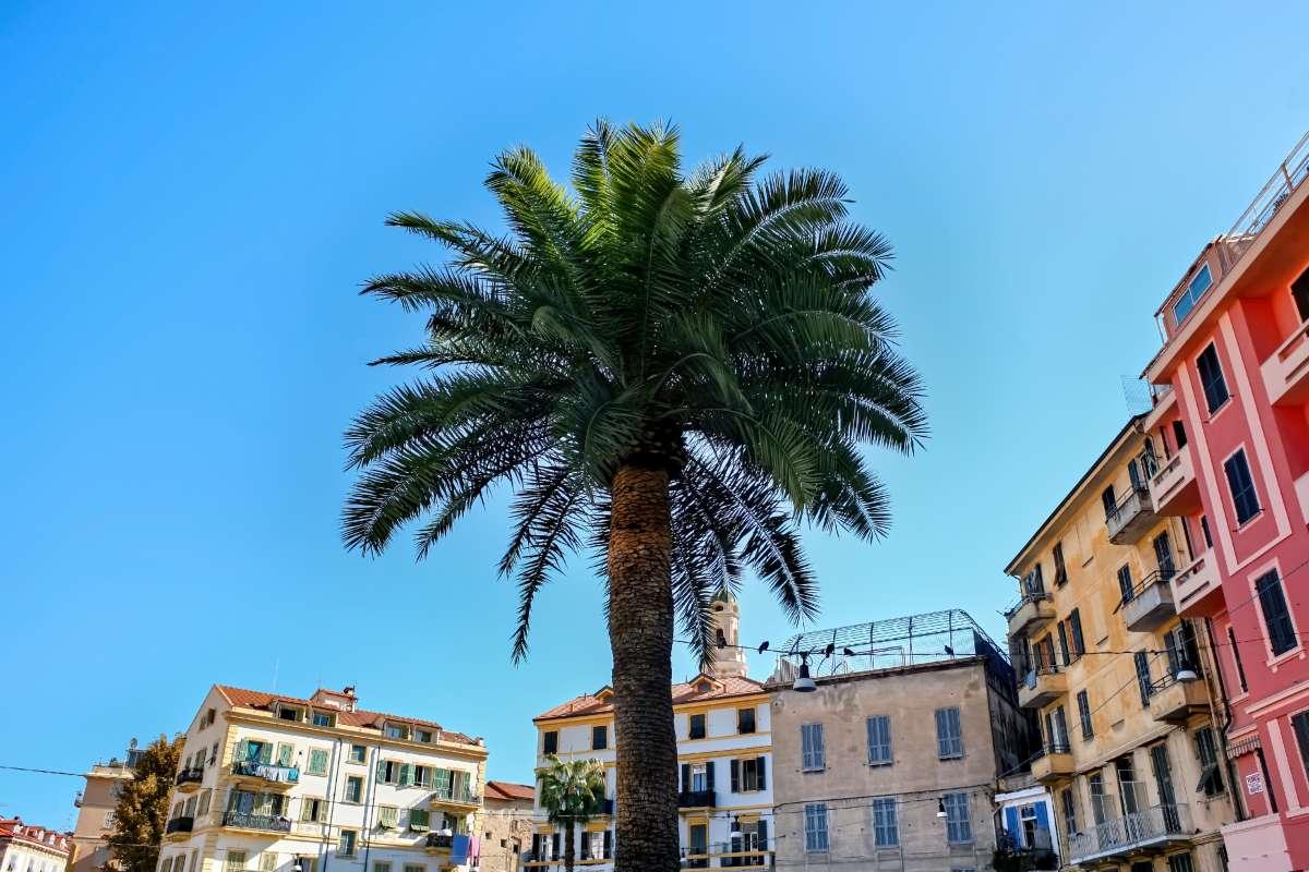Luoghi di mare migliori del centro-nord Italia: una palma circondata da palazzi colorati tipici della città di Sanremo
