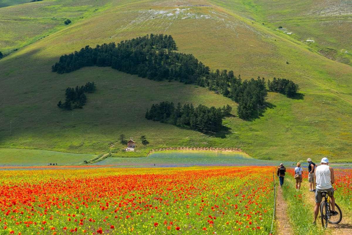 Attività da fare in Umbria: passeggiata a Castelluccio di Norcia