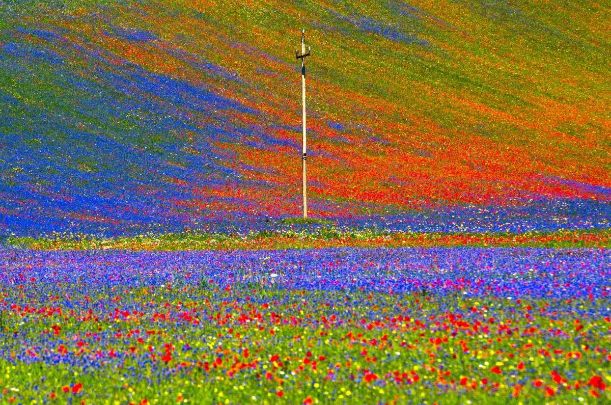 Cosa vedere in Umbria: fioritura di Castelluccio di Norcia